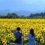 Những cảnh đẹp hấp dẫn nhất với tour du lịch Nghệ An