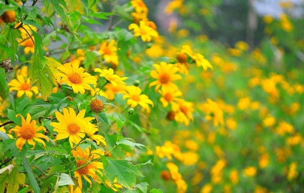 hoa da quy 3