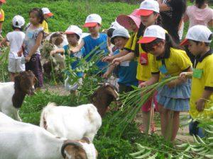 Trang trại đồng quê Ba Vì