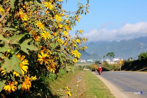 Những điểm săn hoa dã quỳ dọc đất nước