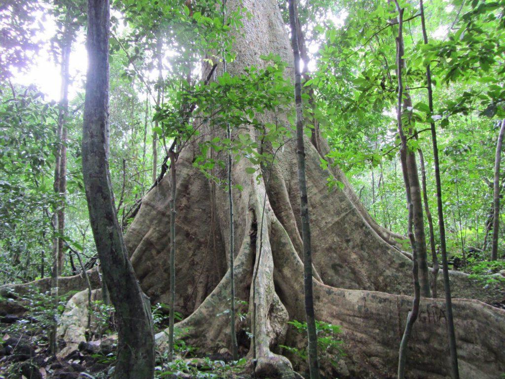 Thảm thực vật phong phú