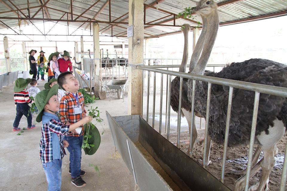 hoạt động tại Detrang Farm