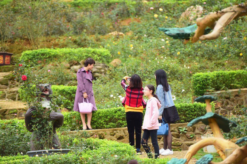 Vườn hồng tại khu du lịch Paragon Resort